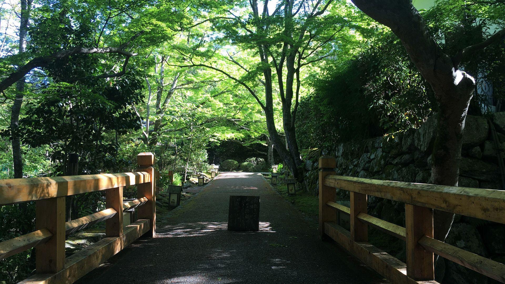 宝泉院の参道