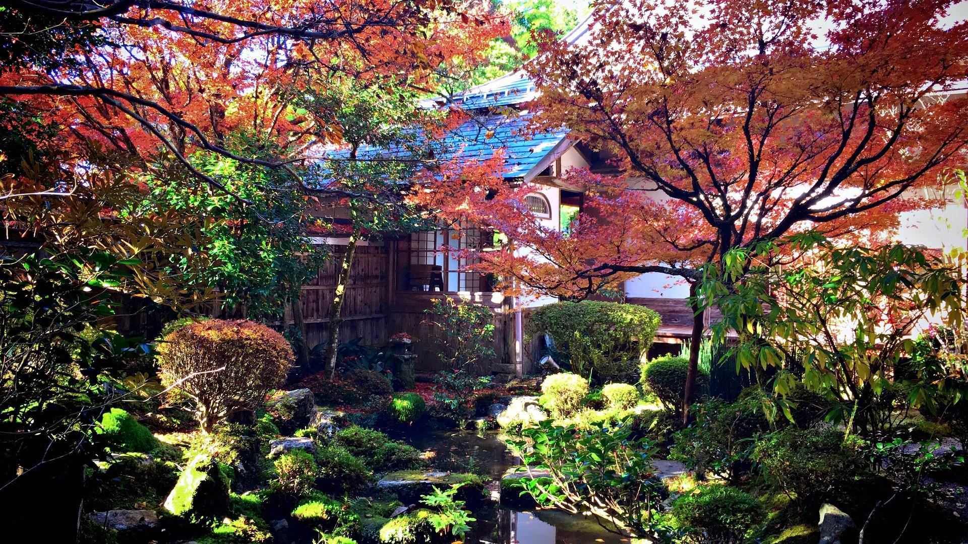 宝泉院-鶴亀庭園の紅葉