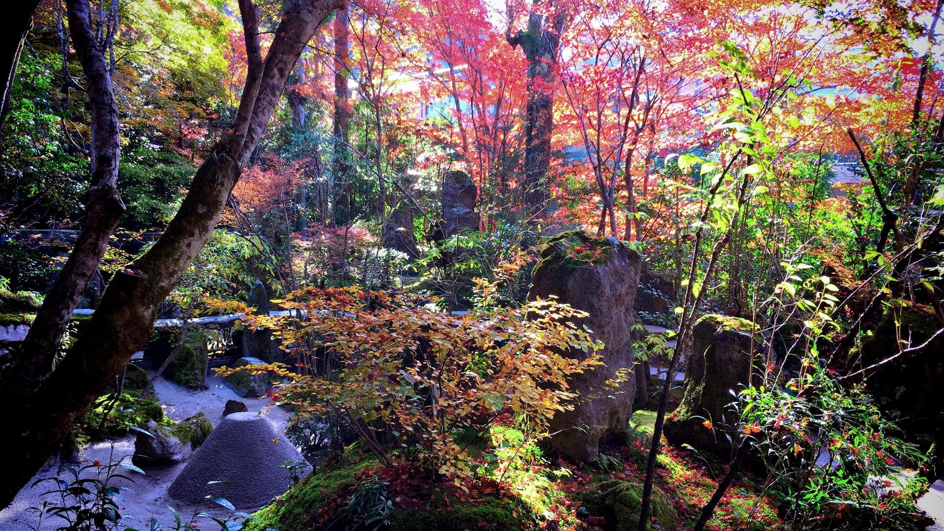 宝泉院-宝楽園の紅葉