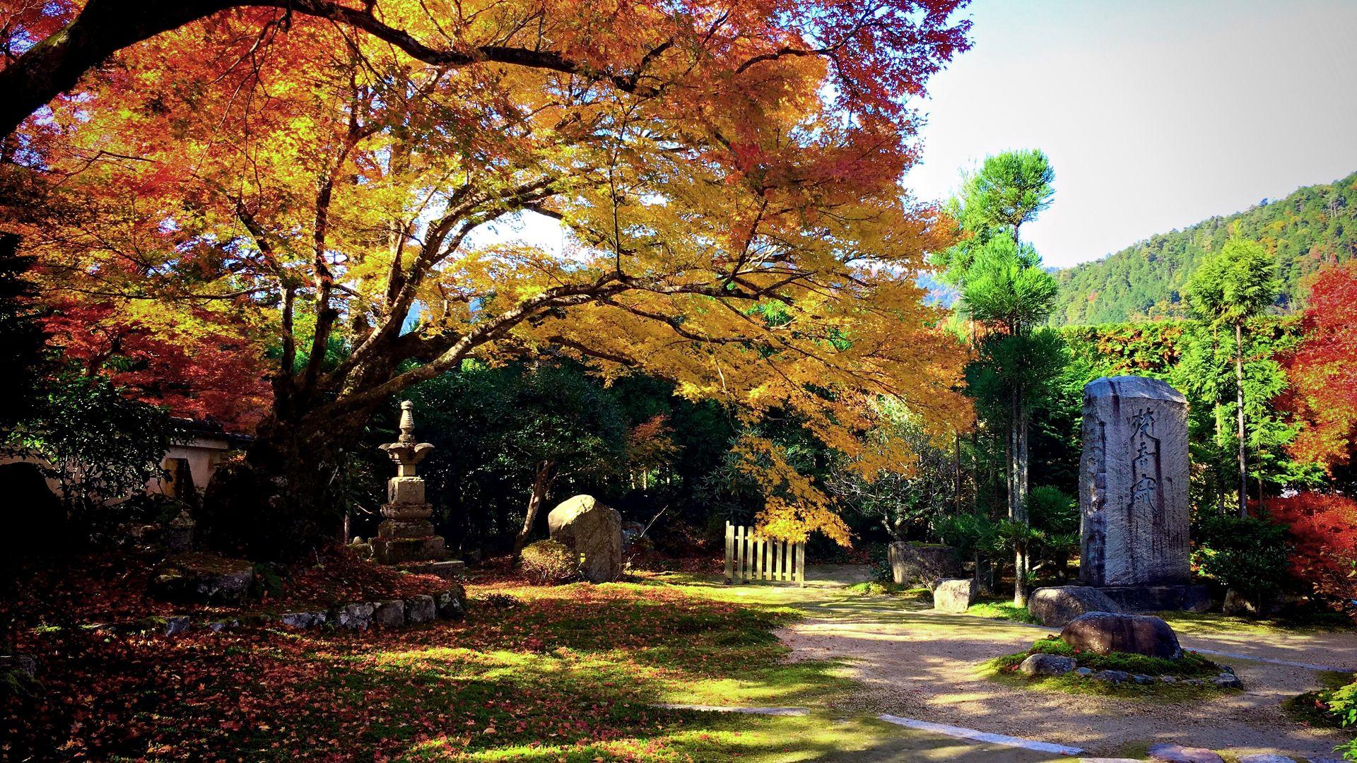実光院-西庭園の紅葉