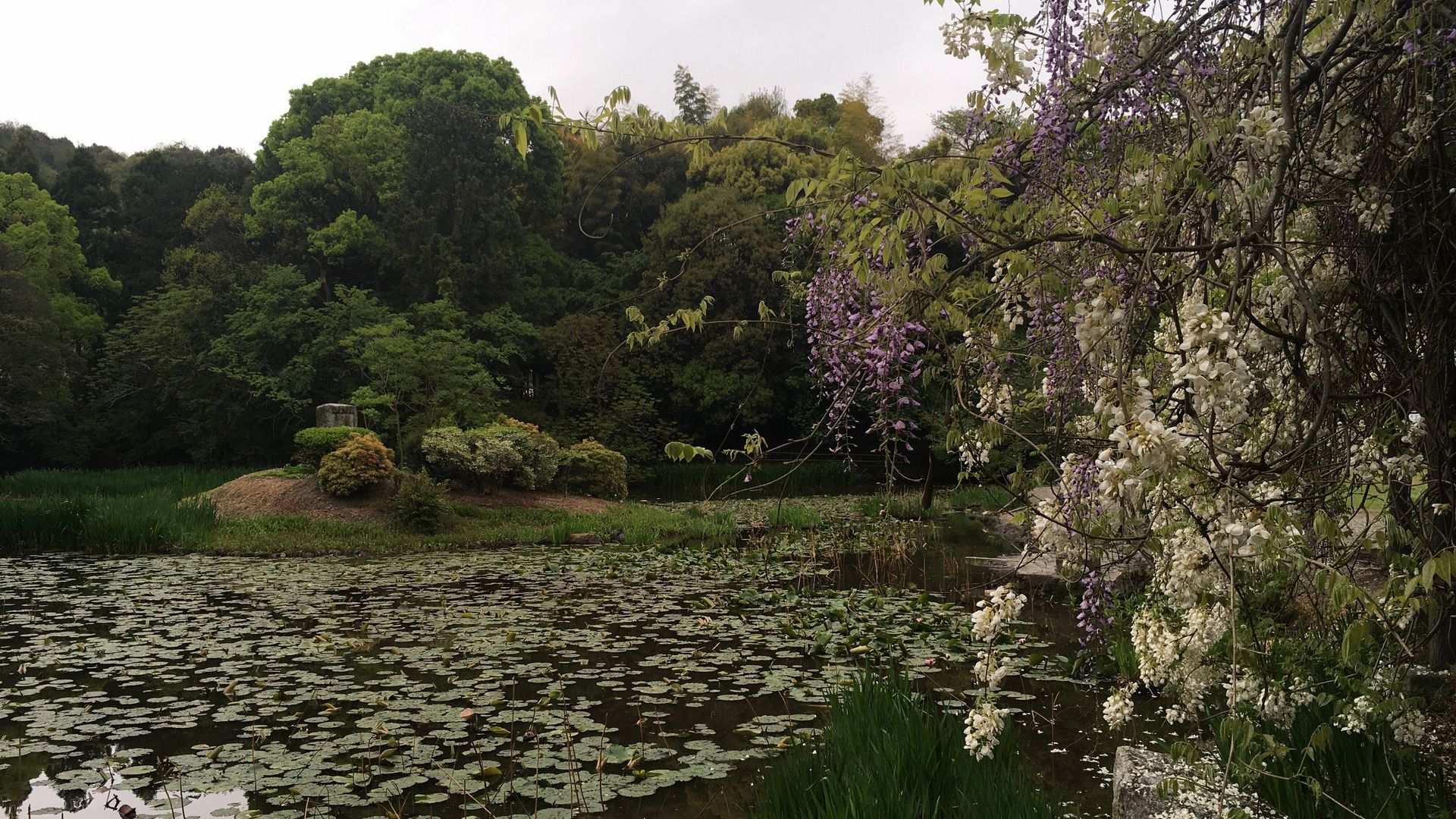 勧修寺-氷室池の風景