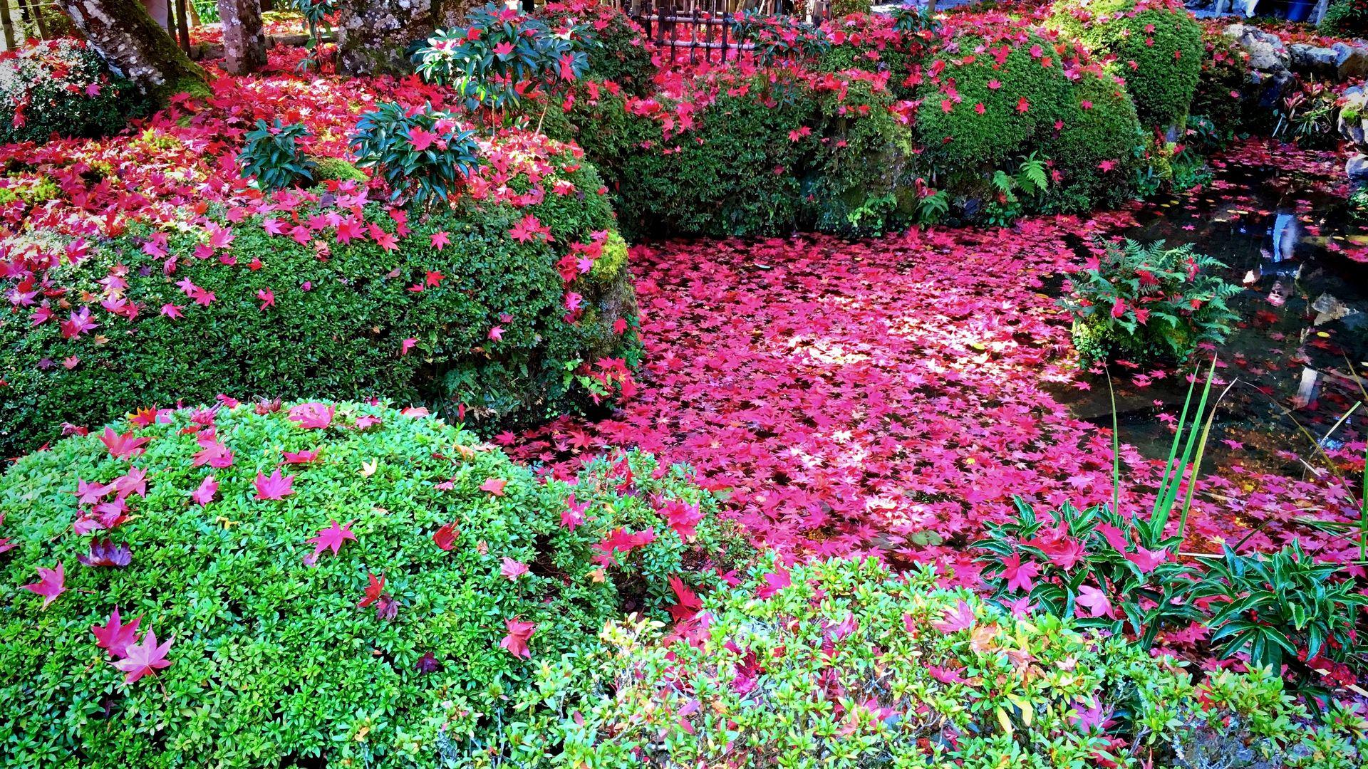 寂光院-汀の池の紅葉