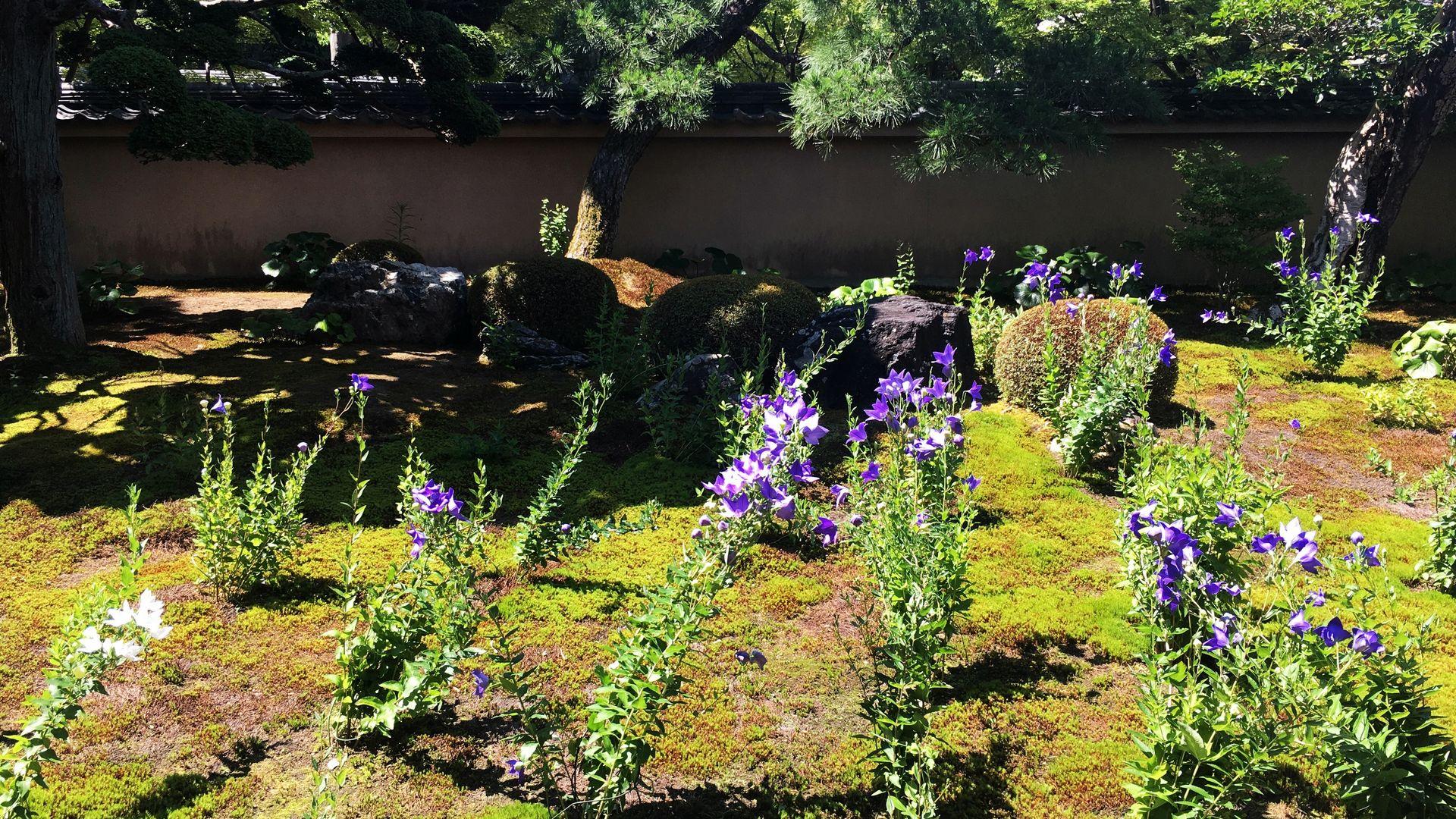天得院の方丈前庭02