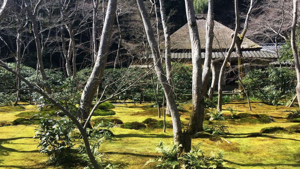 祇王寺の苔庭(Garden of Gio-ji Temple)