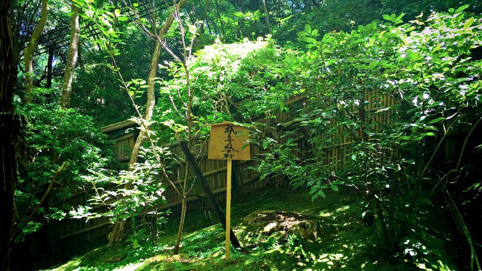 祇王寺の祇王寺祇女桜(Cherry tree of Gio-ji Temple)