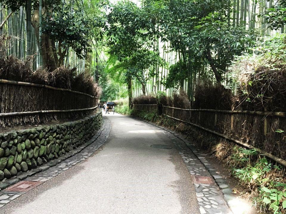 嵐山の竹林(Bamboo forest of Arashiyama)