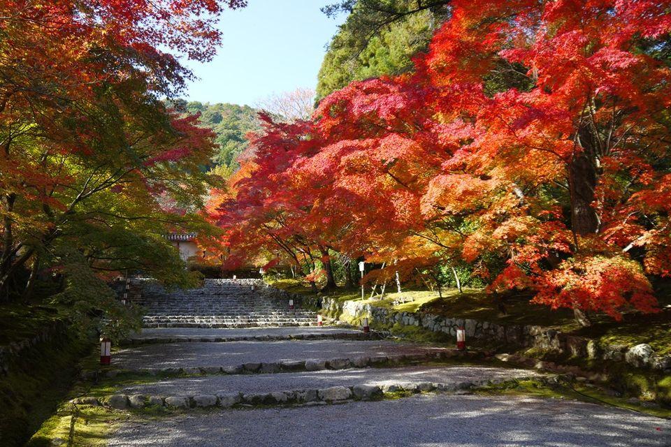 二尊院の紅葉の馬場(Riding ground of Nison-in Temple)