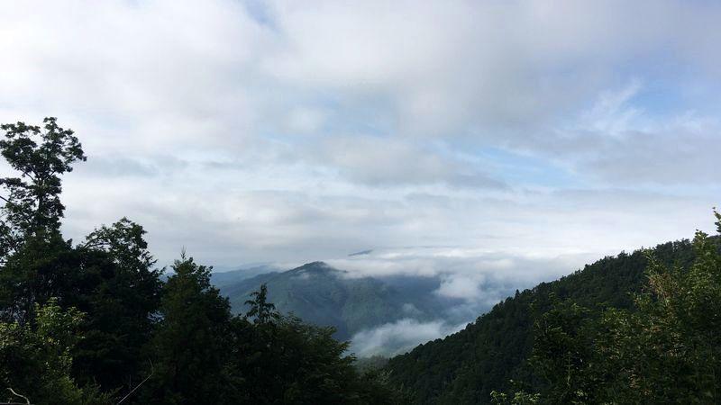愛宕神社表参道の風景(Mt. Atago)